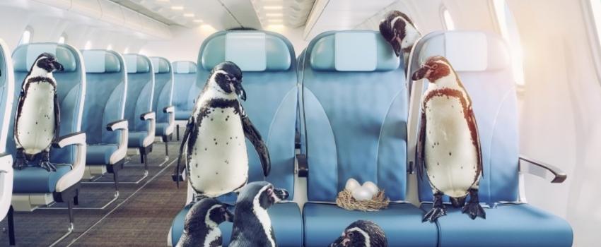 Pourquoi a-t-on (souvent) froid en avion?
